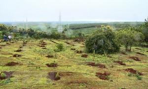 Khởi tố 4 bị can liên quan vụ 'mất' gần 3.000 ha đất lâm nghiệp, đất rừng tại Gia Lai