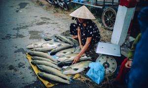 Thừa Thiên Huế: Cá lồng nuôi chết hàng loạt dọc sông Bồ