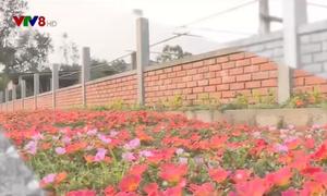 Độc đáo con đường hoa nông thôn mới