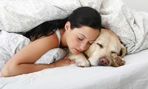 Ngủ với thú cưng có nguy cơ lây nhiễm bệnh gì?