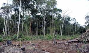 Đắk Nông: Hợp tác xã Hợp Tiến để mất rừng với diện tích lớn