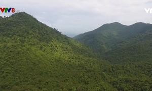 Bảo vệ rừng dựa vào cộng đồng