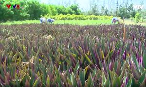 Độc đáo vườn cây dược liệu lớn nhất miền Trung