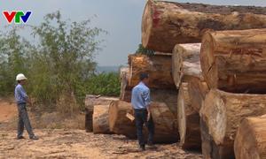 Kon Tum kiến nghị sớm kết luận vụ tự ý vận chuyển gỗ tang vật