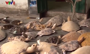 Yêu cầu điều tra bổ sung vụ tàng trữ xác rùa biển tại Nha Trang