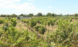 Nhiều lý do cho hành vi trồng cây, xây nhà trái phép