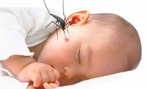 Cách phòng bệnh sốt xuất huyết hiệu quả