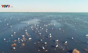 Độc đáo cảnh hàng triệu con cá di cư