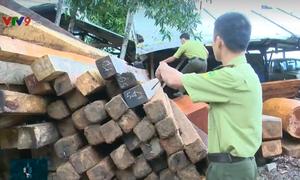 """""""Cơn sốt"""" gỗ làm lồng bè thủy sản tại khu vực Nam Trung Bộ"""
