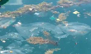 Rác thải nhựa dồn ứ ven bờ vịnh Vũng Rô