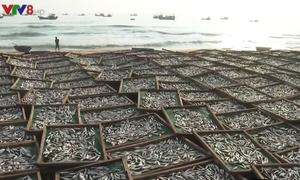 Nghề hấp cá ở bến cá Tân An