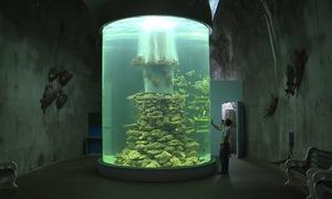 Bảo mẫu của những sinh vật đại dương