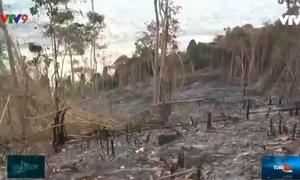 Bình Thuận: Yêu cầu công an vào cuộc vụ đốt phá núi Voi