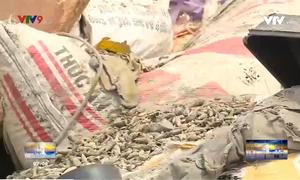 Bức xúc ô nhiễm từ vỏ sò, vỏ ốc phế thải