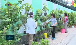 Thành phố Hồ Chí Minh tăng cường mảng xanh bằng nhiều giải pháp