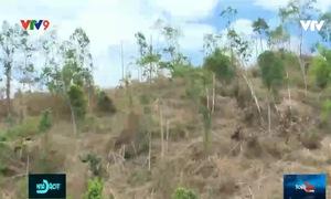 Dai dẳng xâm chiếm đất rừng - làm gì để ngăn chặn?