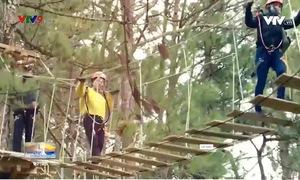 Đi bộ ngắm rừng thông trên cao