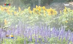 Khám phá cánh đồng hoa rộng hơn 1ha tại TP.HCM