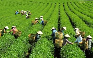 Thung thăng xứ trà Bazan