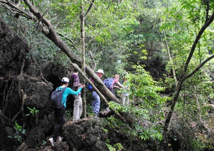 Cat Ba national park preserves medicinal plants