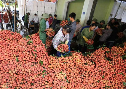 Lychee recognized as South East Asian specialty