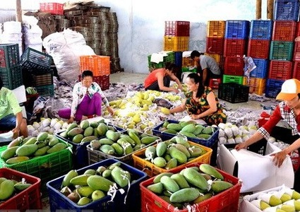 Improving status of Vietnamese agricultural products