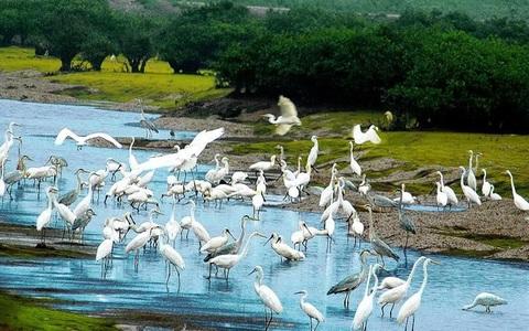 Nức lòng với vẻ đẹp hoang sơ của Cồn Nổi và Đảo Cò