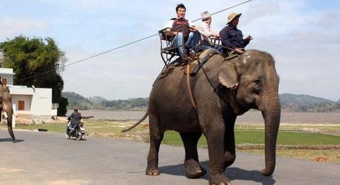 Tổ chức Động vật châu Á tài trợ 65.000 USD để dừng cưỡi voi ở Đăk Lăk