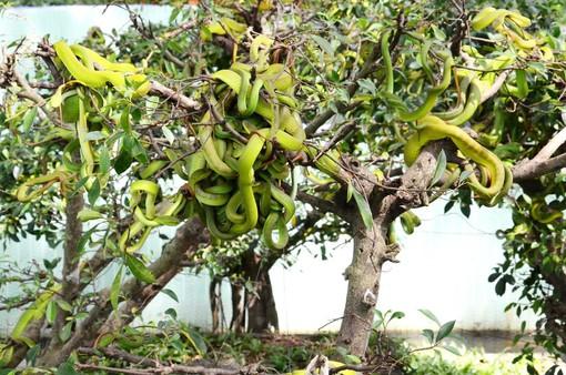 Trại rắn Đồng Tâm - Vương quốc rắn ở miền Tây