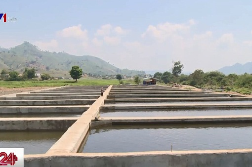 Đắk Lắk: Doanh nghiệp chặn suối... làm hồ nuôi cá