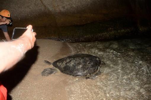Bình Thuận: Cứu hộ thành công rùa biển 30 năm tuổi