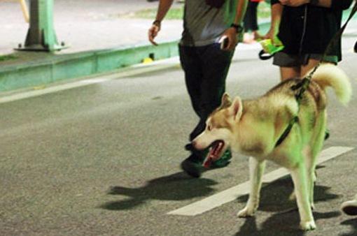 Bắt chó thả rông có khó?