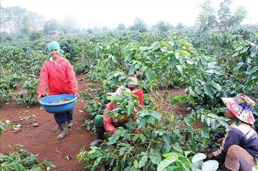 Lối ra nào cho chủ trương chuyển đổi cây trồng ở Tây Nguyên?