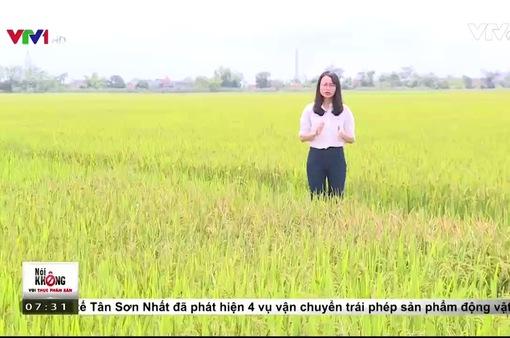 Câu chuyện theo đuổi gạo sạch của một doanh nghiệp tại Nam Định