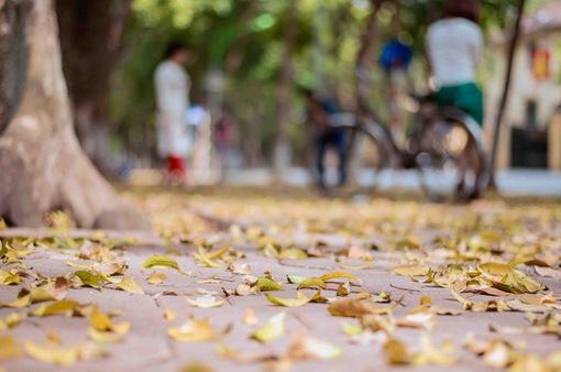 Con đường lãng mạn nhất Hà Nội đẹp ngỡ ngàng mùa cây thay lá