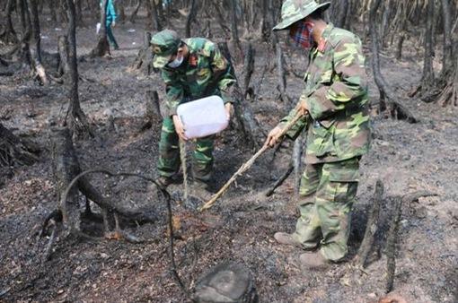Cháy rừng tràm tại An Giang: Do người dân vứt tàn thuốc lá