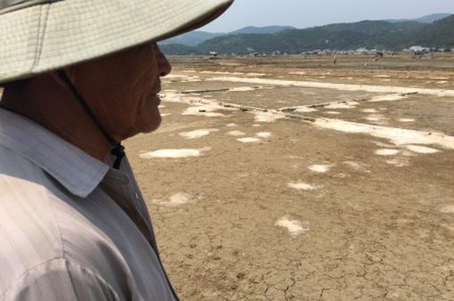 Người nông dân đắng lòng trước những cánh đồng không muối ở Bạch Long