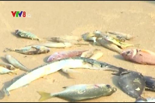 Kon Tum: Không có độc tố trong nước khu vực cá nuôi bị chết
