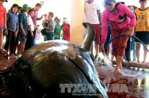 Cá Ông nặng 1 tấn dạt vào bờ tại Phú Yên