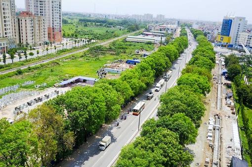 Hà Nội xin cơ chế đặc thù trồng 600.000 cây xanh