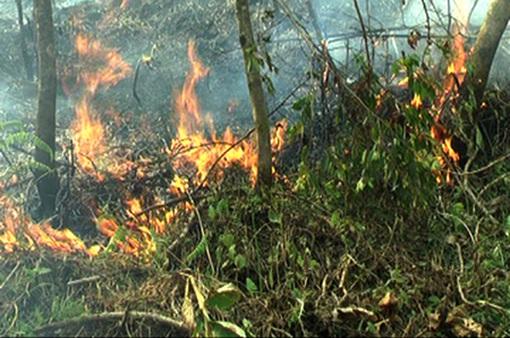 Long An cảnh báo cháy rừng cấp 4