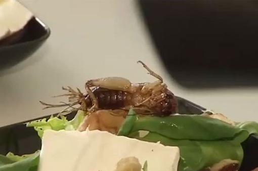 Côn trùng - Giải pháp cho tình trạng thiếu lương thực trong tương lai