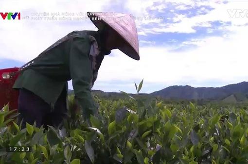 Phát triển nông nghiệp bền vững nhìn từ sự liên kết