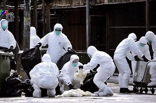 Hàn Quốc tăng cường ngăn chặn dịch cúm gia cầm
