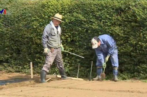 Người già Nhật Bản thuê đất làm nông nghiệp