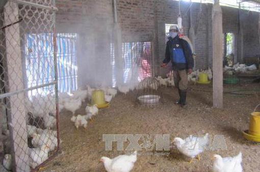 Xuất hiện ổ dịch cúm gia cầm tại Cao Bằng