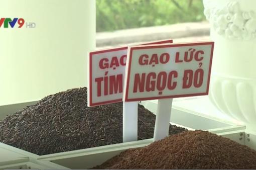 Sản xuất gạo sạch - Hướng đi bền vững