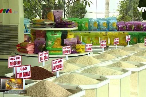 Xuất khẩu gạo năm 2017: Khởi sắc đầy bất ngờ