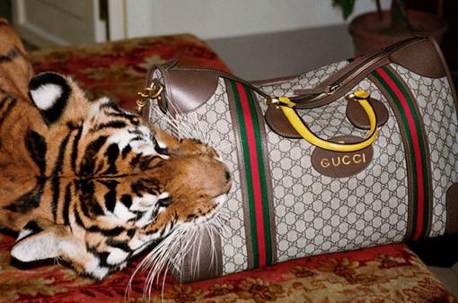 Loại bỏ lông thú khỏi bộ sưu tập Gucci