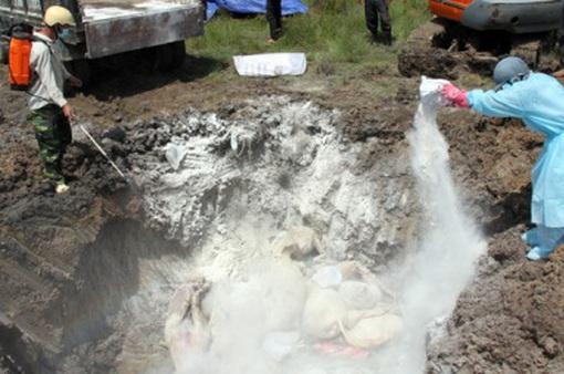 Xuất hiện ổ cúm H5N6 trên đàn vịt trời nuôi ở Đăk Lăk